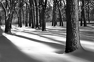 Late afternoon sunlight highlights the softness of a new fallen snow in Fabyan Forest Preserve.   Aspect Ratio 1w x 1h