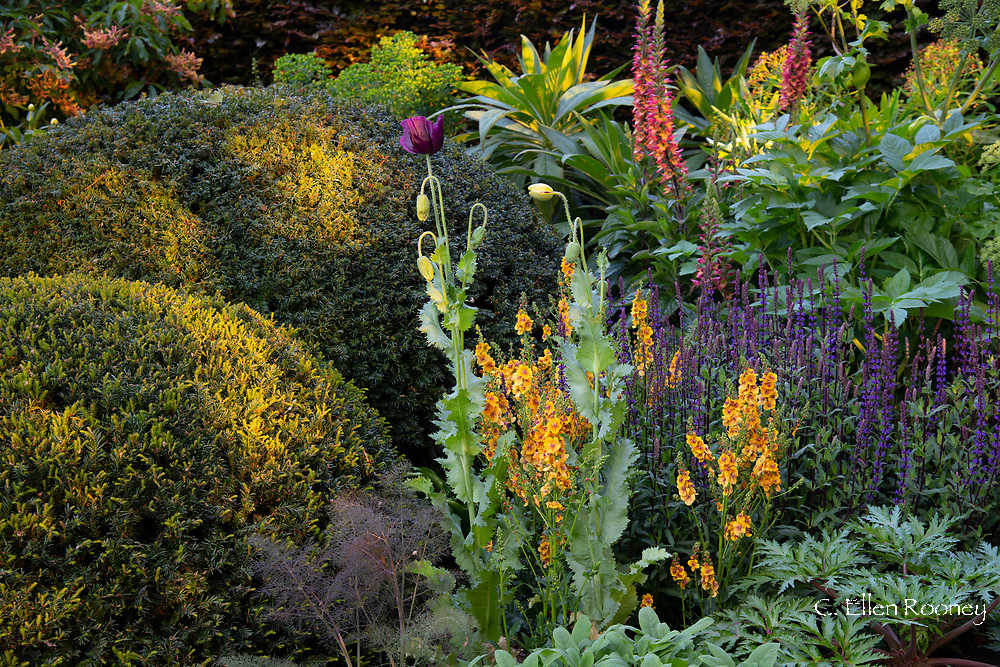 Mixed planting in the Morgan Stanley Garden designed by Chris Beardshaw and winner of a gold medal in the show garden category at the Chelsea Flower Show 2019