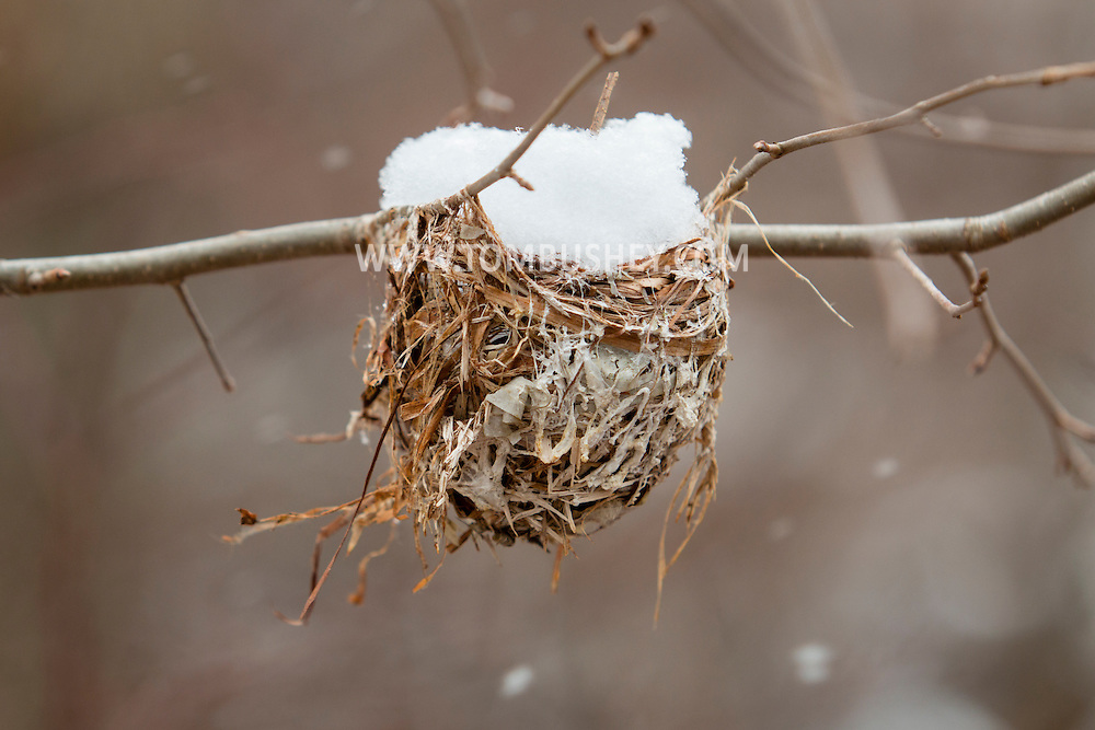 HIghland Mills, New York - A snow-filled bird's nest at Earl Reservoir on March 28, 2015.