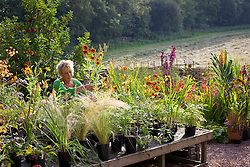 Carol Klein arranging plants in the nursery at Glebe Cottage