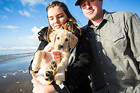 Yellow lab puppy in Manzanita, Oregon.