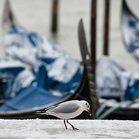 Snow in Venice 2012