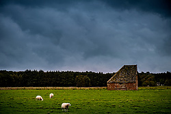 A local sheep farm under a dark sky threatening rain