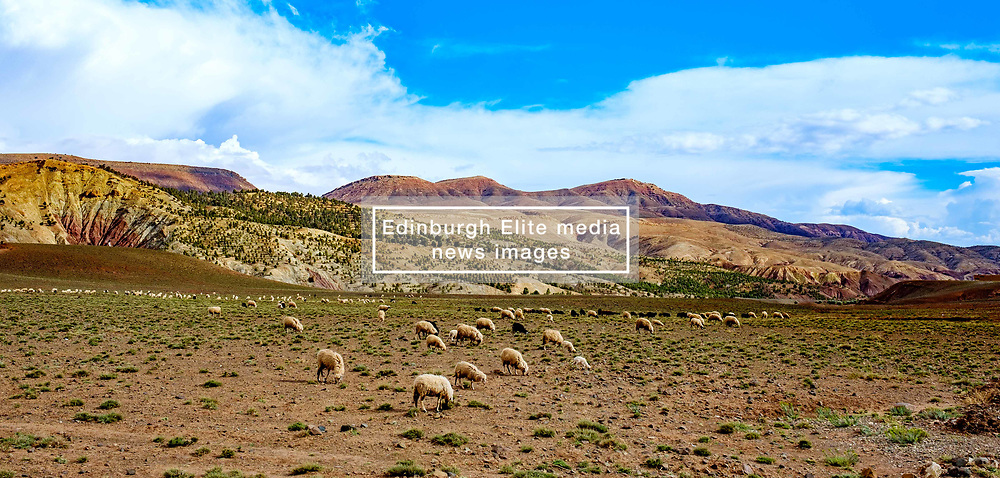 Sheep and goats grazing in the foothills of the Atlas Mountains near Telouet, Morocco<br /> <br /> (c) Andrew Wilson | Edinburgh Elite media