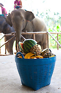 Elephant Hills Luxury Tented Camp in the rainforest in Southern Thailand near Khao Sok National Park. The Elephant Experience which offers an opportunity to interact, feed and wash the endangered Asian Elephant.  A basket of fruit prepared for the elephants.