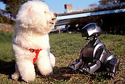 Sony's robopet Aibo playes with a bichon frise in Tokyo, Japan.