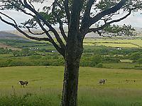 Landscape inner parts Burren Ireland