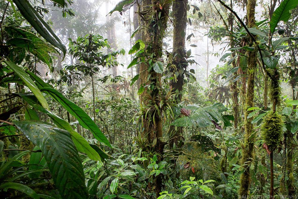 Los Cedros cloud forest, Ecuador