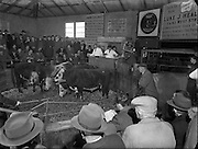 Irish Farmers Journal  - Auction Ring at Drogheda Auctioneers Mr W Clarke.15/11/1956