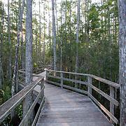 Corkscrew Swamp Sanctuary, National Audubon Society, Naples, Florida.