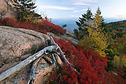 A fall scene atop The Beehive in Acadia National Park, Maine, USA