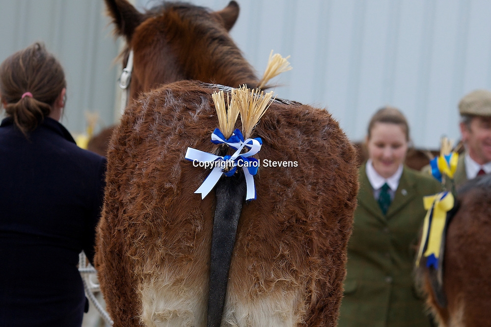 North West and Wales Shire Foal Society Show 2012<br /> Miss C Young's Woodhouse Olympian  f 03/01/12<br /> Sire   Dothan Buscot<br /> Dam   Acle Lady Jane