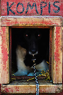 Sled dog seeking peace in his litlle house in Beitostølen, Norway.