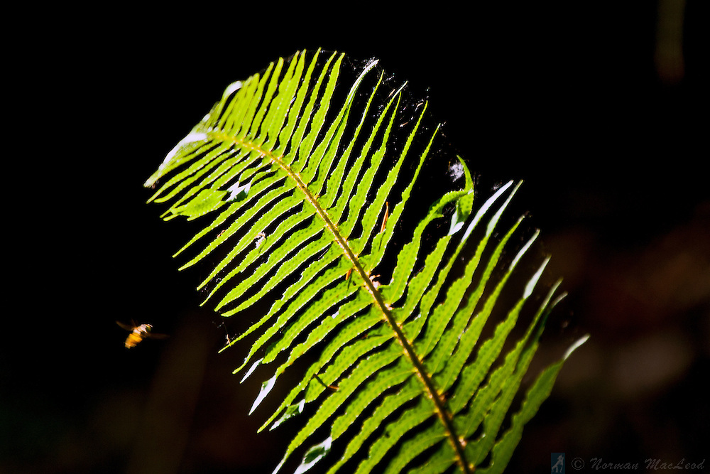 Fern captured in the sunlight