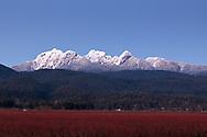The Golden Ears Mountains from the farmland of Pitt Meadows (Blueberries).  Mount Blanshard, Edge Peak, Blanshard Peak, and Alouette Mountain make up the Mount Blanshard massif in British Columbia.  Photographed from Pitt Meadows, British Columbia, Canada