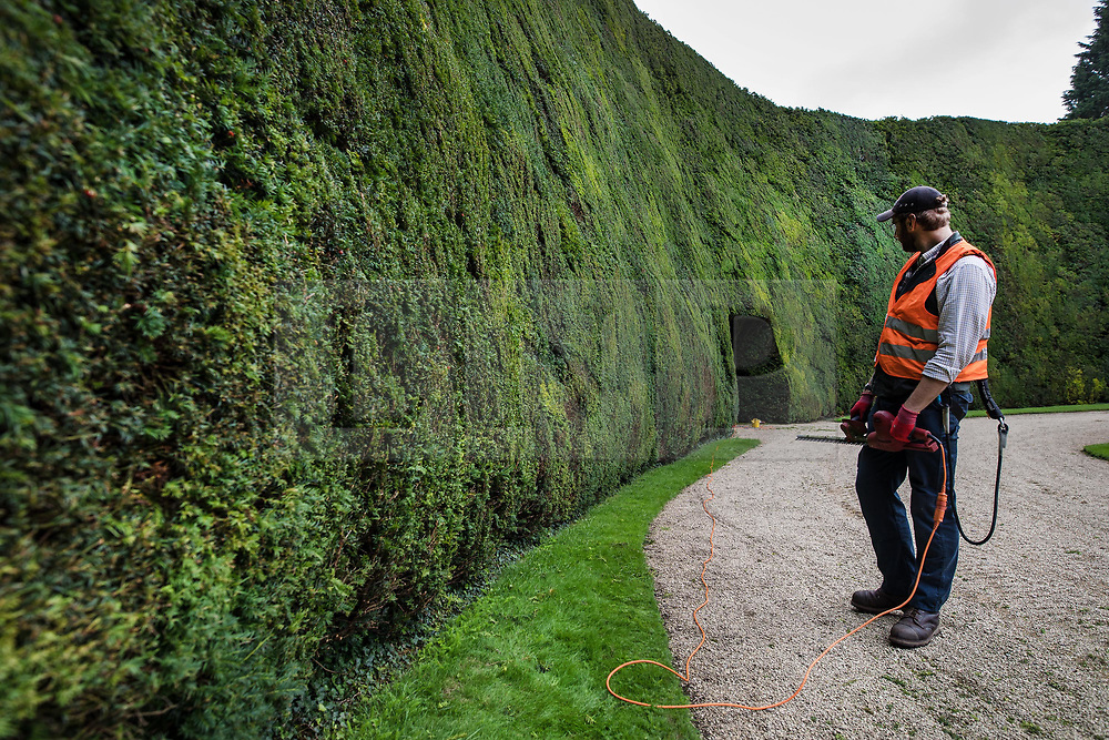 © Licensed to London News Pictures. 07/08/2017. Cirencester, UK. Forester Jason Buckton prepares to trim the world's tallest yew hedge on The Bathurst Estate.  The 40 foot tall 150 yard wide hedge is trimmed every august over a two week period. Six inches of growth are cut making a ton of clippings. The clippings have been used in past years in the making of a cancer drug.   Photo credit: Peter Macdiarmid/LNP