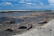 - Punta Delgada