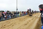 Nederland, Sambeek, 3-3-2014 Bij Boxmeer, tussen Sambeek en Vortum Mullum, wordt voor de 274e keer de Metworstren gehouden. Deze paardenrace voor vrijgezelle ruiters uit Boxmeer vindt altijd plaats op carnavalsmaandag. Steeds rijden drie paarden met lokale ruiters een race van 750 m. op de met zand bedekte weg. Hierna volgt de Knollenrace (foto), een wedstrijd tussen werkpaarden. Daarna de finale, de koningsrit, de winnaar hiervan levert de koningsruiter eeuwige roem op. Winnaar werd Peter Jansen. In 1740 sloeg de koets van een adelvrouw hier op hol, waarna toevallig op het land rijdende, ongehuwde ruiters voor haar redding zorgden. Als beloning kregen deze een grote metworst, twee broden, twee vaten bier en een halve varkenskop. Foto: Flip Franssen/Hollandse Hoogte