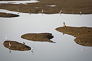 A dog and birds reflected on the water's surface (Mumbai, India).