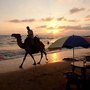 Camel on the beach, Tartous, Syria. Chameau sur la plage de Tartous, Syrie.