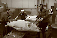 Mar 4, 2006; Tokyo, JPN; Tsukiji.Buyers load a frozen tuna on the cutting table to be cut in to quarters in a warehouse at the Tsukiji Fish Market...After tuna is caught, it is flash frozen at sea to keep it fresh until it is brought to the market to be sold...Photo credit: Darrell Miho