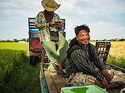 "23 NOVEMBER 2016 - AYUTTHAYA, THAILAND:   Farm workers relax during the rice harvest in Ayutthaya province, north of Bangkok. Rice prices in Thailand hit a 13-month low early this month. The low prices are hurting farmers. Rice exports account for around 10 percent of Thailand's gross domestic product, and low prices frequently lead to discontent in the rural areas of Thailand. The military government has responded by sending soldiers to rice mills, to ""encourage"" mill owners to pay farmers higher prices. The Thai army and navy are also buying for their kitchens directly from farmers in an effort to get more money into farmers' hands.  PHOTO BY JACK KURTZ"