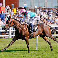 Radiator and Ryan Moore winning the 3.20 race