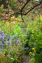 Looking along path towards a bench at Glebe Cottage in autumn with Aster 'Little Carlow' and Helianthus 'Lemon Queen'