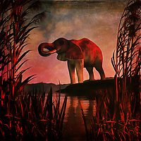 An elephant stands over a pool of water on what is likely a very hot day. This scene depicts the majestic, powerful creature in midst of getting a cool drink. It stands among some beautiful long grass, and this acryl on canvas piece puts this scene against a stunning backdrop of brilliant colors. The elephant is unaware that we are watching it drink. Or it doesn't care. This simple, yet powerful scene simply allows the elephant to exist. It is going to drink its fill, and then move on. Available as wall art, t-shirts, or as interior home décor products. .<br />