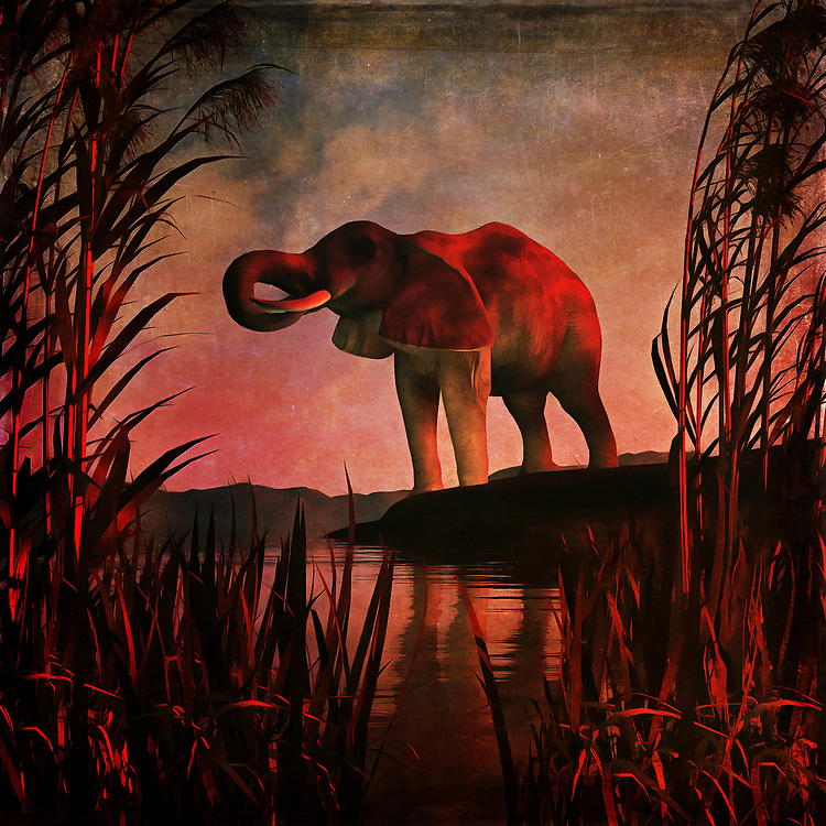 An elephant stands over a pool of water on what is likely a very hot day. This scene depicts the majestic, powerful creature in midst of getting a cool drink. It stands among some beautiful long grass, and this acryl on canvas piece puts this scene against a stunning backdrop of brilliant colors. The elephant is unaware that we are watching it drink. Or it doesn't care. This simple, yet powerful scene simply allows the elephant to exist. It is going to drink its fill, and then move on. Available as wall art, t-shirts, or as interior home décor products.