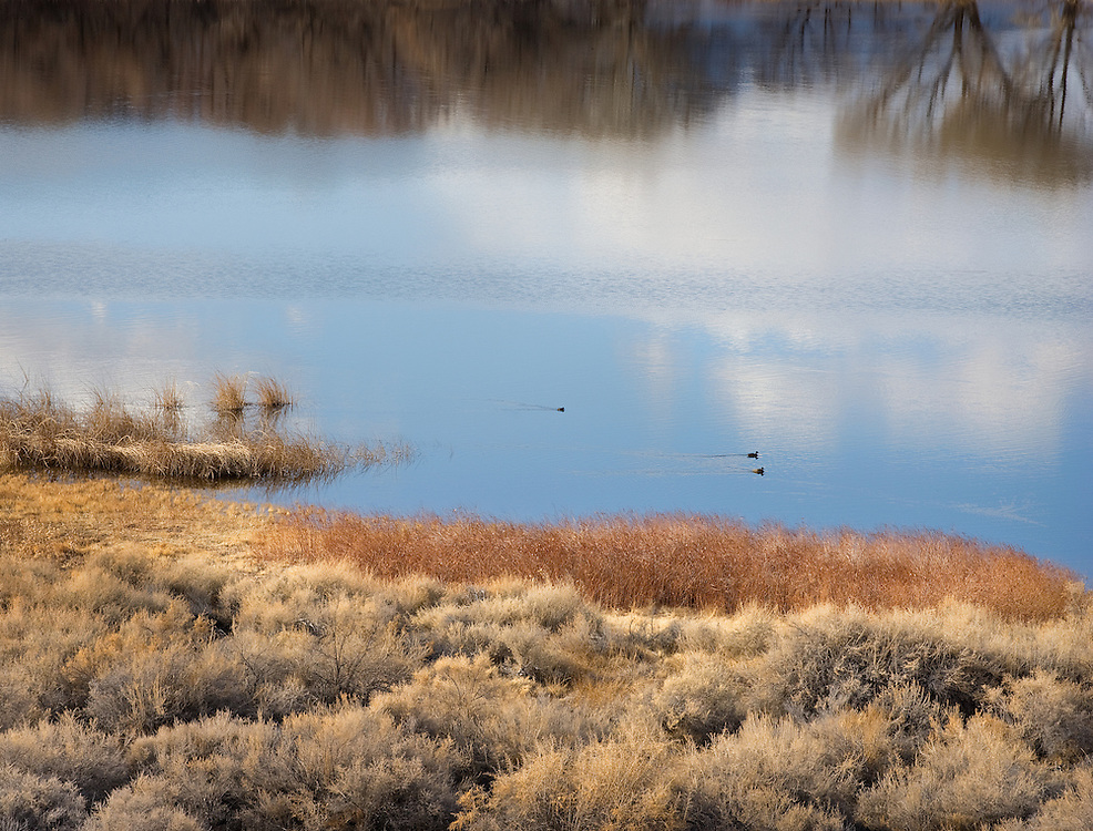 migrating ducks is late winter afternoon at Pahranagat National Wildlife Refuge.