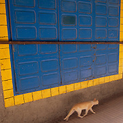 Cat walking past a large barred door.