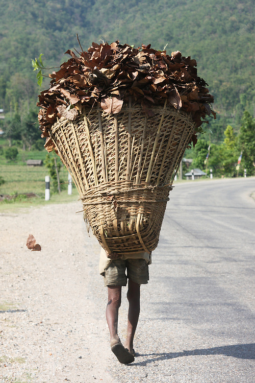 Old man with basket of leaves on country road, Nepal