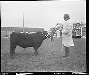 Bull show, RDS.16/02/1971