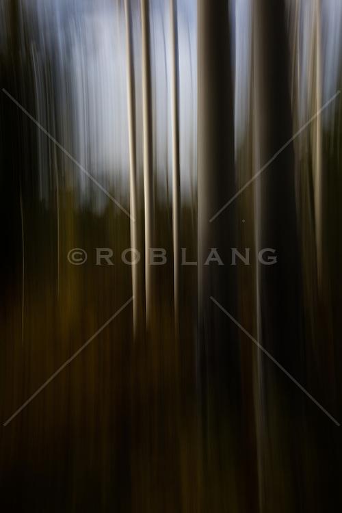 abstract of Aspen Trees in Santa Fe, NM