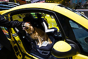 The 61. IAA (Internationale Autoausstellung) 2005 is one of the World's biggest trade fairs of the automotive industry..Doggy's favourite: Peugeot 1007.