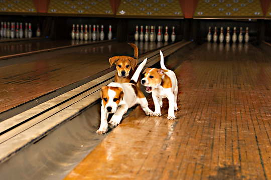 Photos of animals taken at the Rock & Bowl, New Orleans, LA