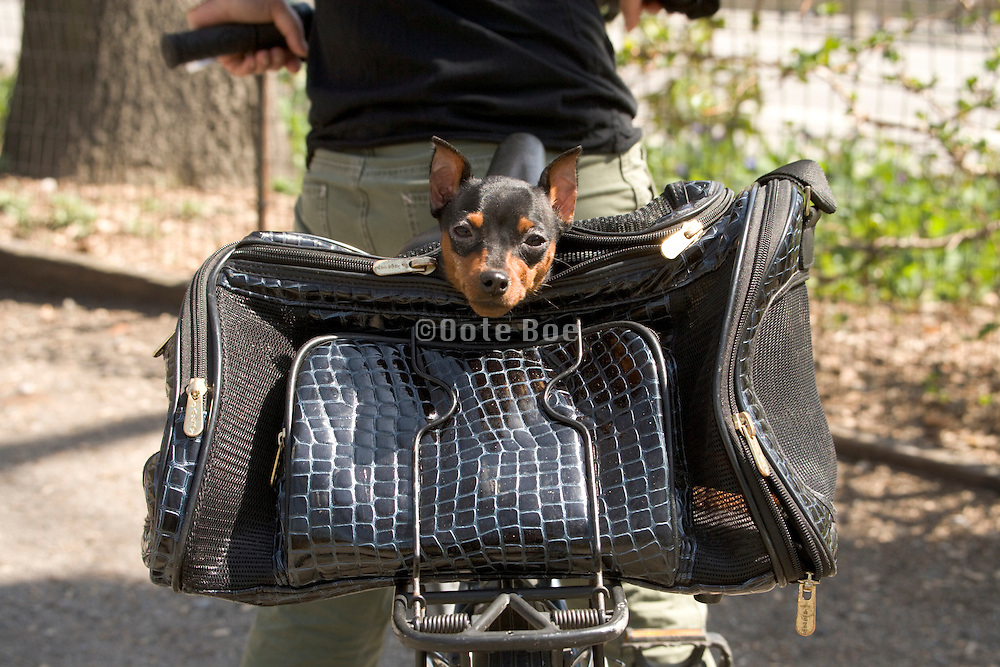 little dog on in bag on the back of a bicycle