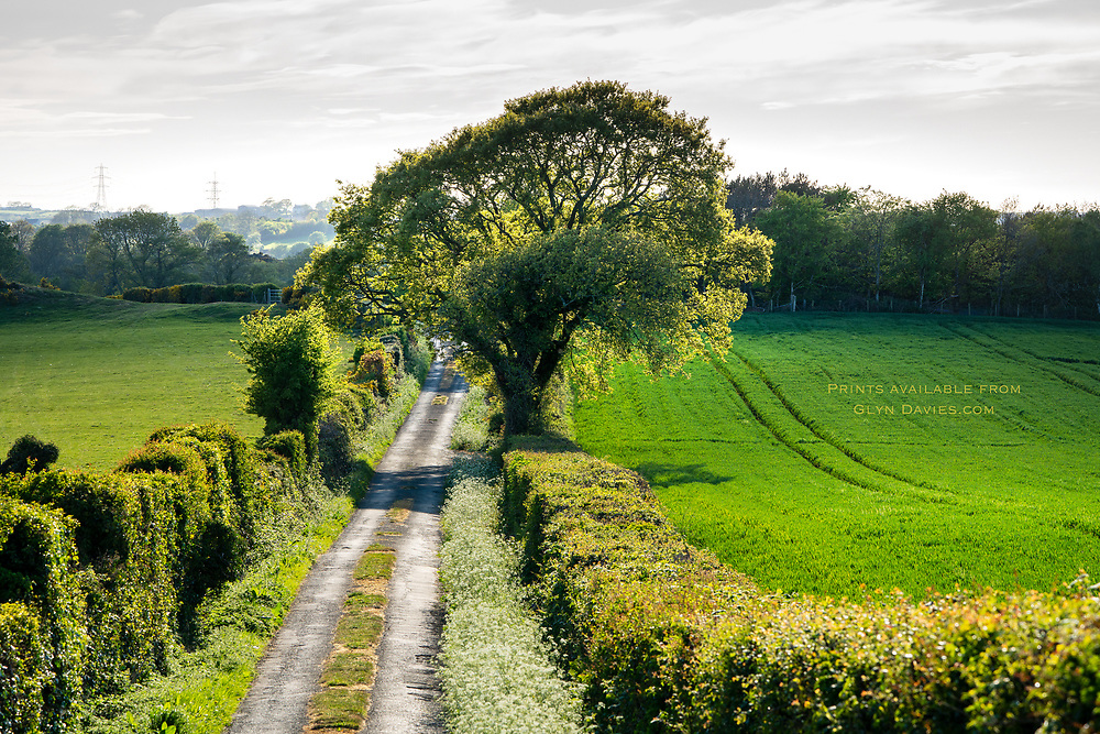 After weeks in self isolation and lockdown in South Africa, walks in the Anglesey countryside really were like a walk to freedom. Everything seemed fresh, special, more intense and beautful than ever before. We really do live in a beautful place.