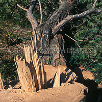 Desmatamento, Florianopolis, Santa Catarina, Brasil. foto de Ze Paiva/Vista Imagens