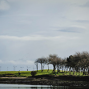 A tree lined hill by the water's edge at the harbour in Malahide, North Co. Dublin