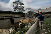 World Animal Protection - Sinabung Eruption