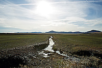 A small creek divides a field of bluegrass with a small amount of winter runoff Monday, Jan. 9, 2012 near Tensed, Idaho.