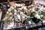Roma 3 Febbraio 2012.Nevicata a Roma, vasi di fiori piene di neve