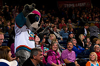 KELOWNA, CANADA - NOVEMBER 3: Kelowna Rockets' mascot Rocky Raccoon hams it up with the fans against the Brandon Wheat Kings  on November 3, 2018 at Prospera Place in Kelowna, British Columbia, Canada.  (Photo by Marissa Baecker/Shoot the Breeze)