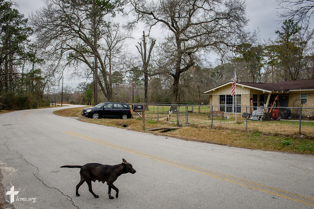 A dog walks across the street adjacent to a home being repaired by volunteers from LCMS congregations on Thursday, Feb. 8, 2018, in Houston. Recovery work is still underway almost six months after Hurricane Harvey devastated parts of Texas.  LCMS Communications/Erik M. Lunsford