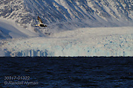 Male eider in full breeding plumage flies over icy fjord waters past distant glacier in April; Kongsfjorden, Svalbard.