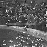 Rome, 25-02-1957. Italian actress Gina Lollobrigida in front of the Trevi Fountain / Roma, 25-02-1957. L'attrice Gina lollobrigida davanti alla fontana di Trevi - Marcello Mencarini Historical Archives