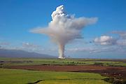 Cane fire, sugar cane field, Maui, Hawaii