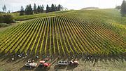 Alexana vintage 2017, Dundee Hills AVA, Willamette  Valley, Oregon